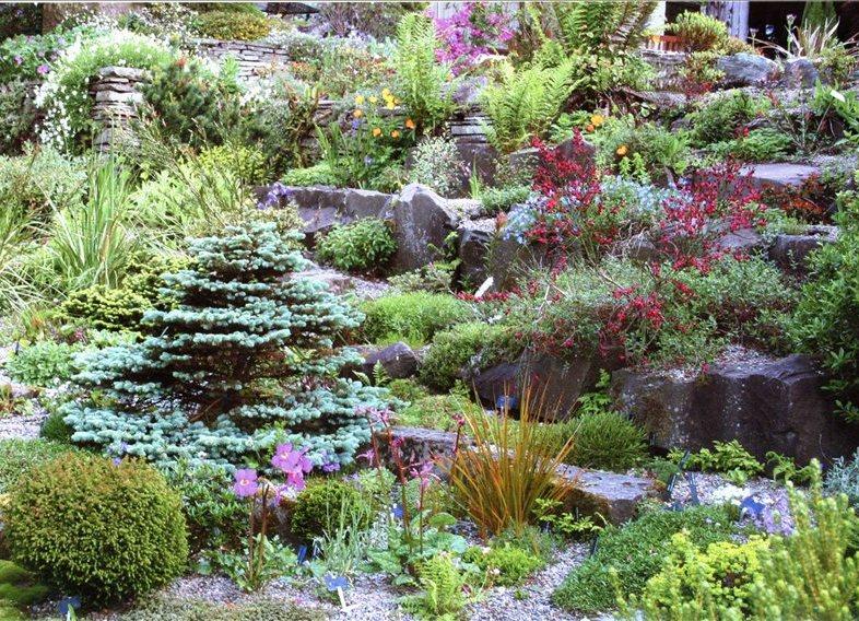 каменистые сады на участке