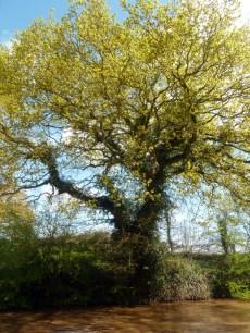 shropshire union canal 3