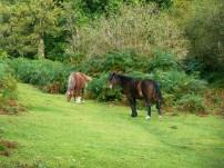 chirk-castle-ponies