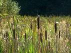 erddig-country-park-2