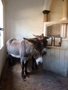 erddig-donkeys