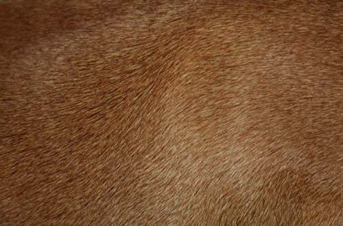 Animal Rights Wallpaper A Collection Of High Quality Free Fur Textures Designbeep