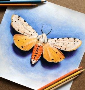 pencil drawings amazing colored morgan davidson detailed drawing sketch illustrations super illustration behance 3d via designbolts artworks moth stunning watercolor