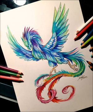pencil drawings amazing colour lipscomb katy dragon phoenix