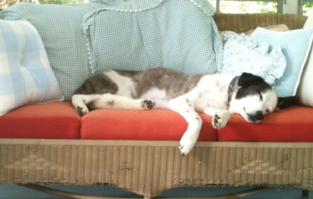 Susie resting in the sun room.