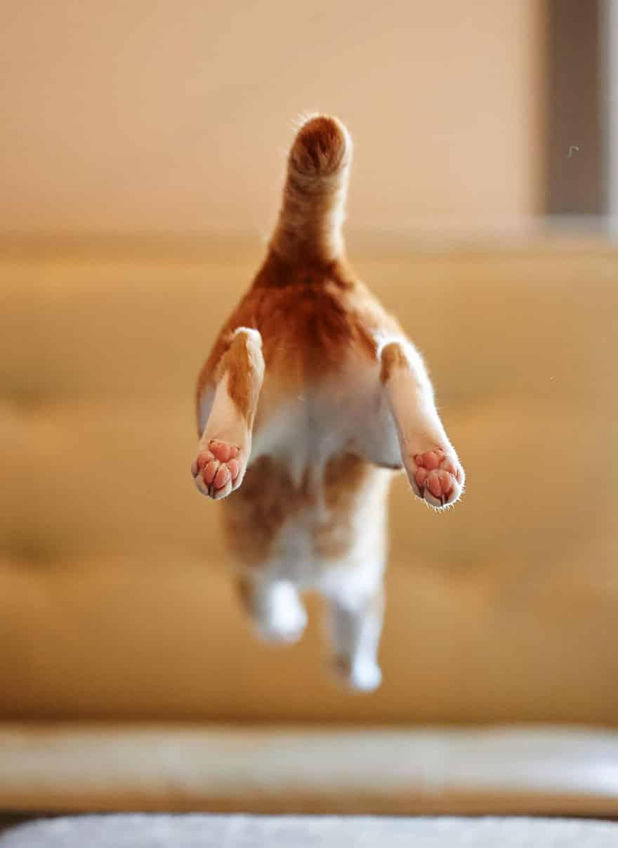 52 Jumping Cats At Play Look Like Ninjas DesignBump