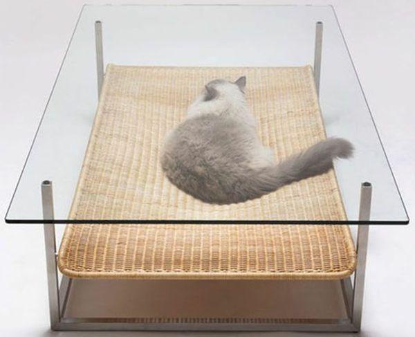 Five pet friendly furniture for you home Designbuzz