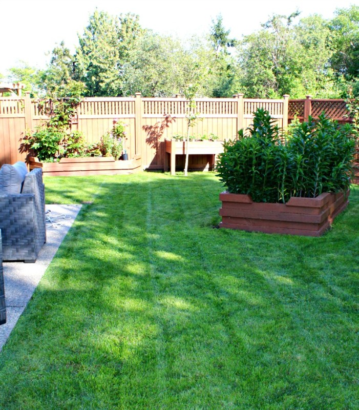 deep green lawn yard transformation