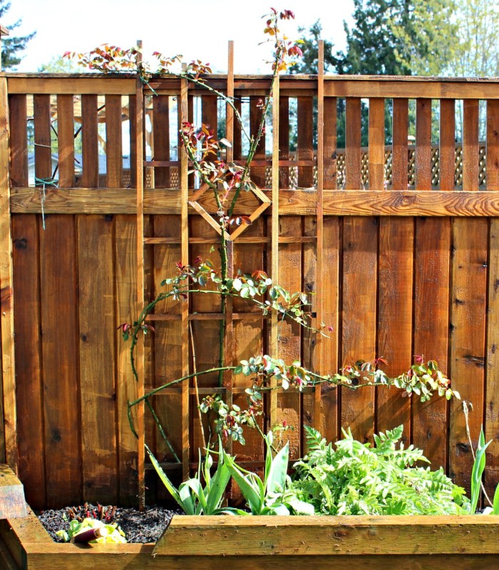 cedar fence pressure washed in preparation for staining with Behr semi transparent stain as part of the 6 week yard transformation challenge. #yardtransformations 2018