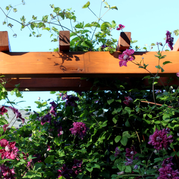Adding a Trellis to your Fence