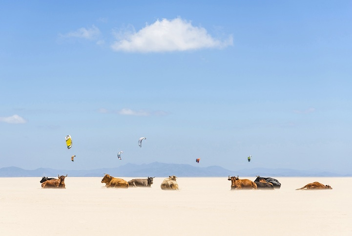 Cows And Kites - 2013-11-08_228746_places.jpg