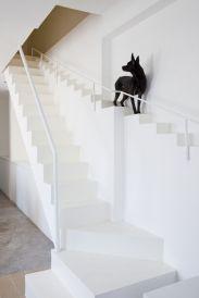Escada alternativa para cães e gatos