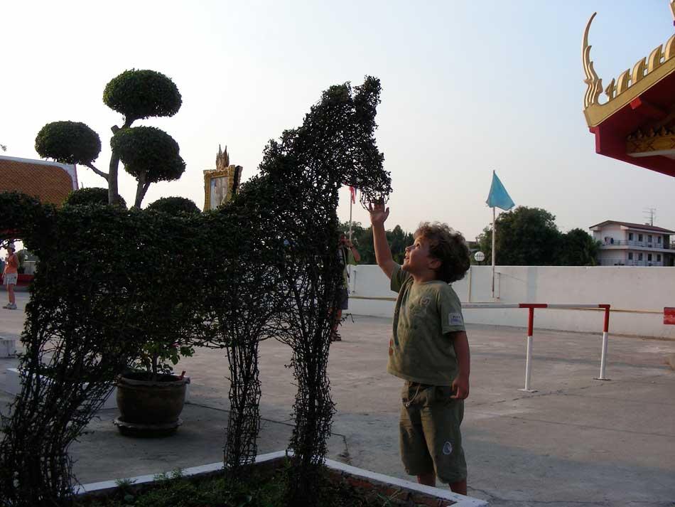 vegetal horse