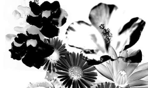 Просто красивые цветочные кисти