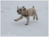 Winter Series Snow Play 6