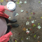Rainy Fall Days