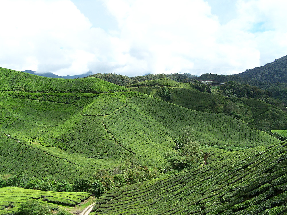 Images of Cameron Highlands of Malaysia  The Orang Asli People  DesignedbyNatalie  Design