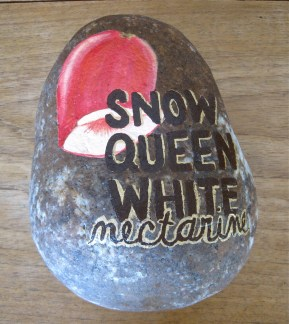 Snow Queen White Nectarine
