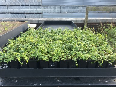 Plant leaf types play an important role in influencing water retention in the canopy, and that the role of low-growing plants, such as Vinca minor, should not be neglected.