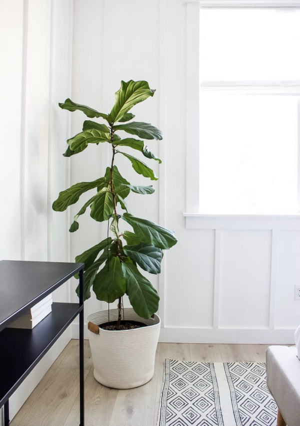 Best Faux Trees & House Plants