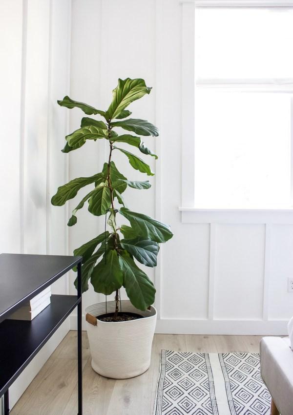 Best Faux Trees & House Plants