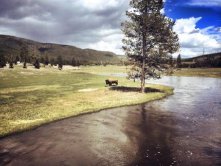 Yellowstone Park - De ce să eviţi atracţiile cu animale