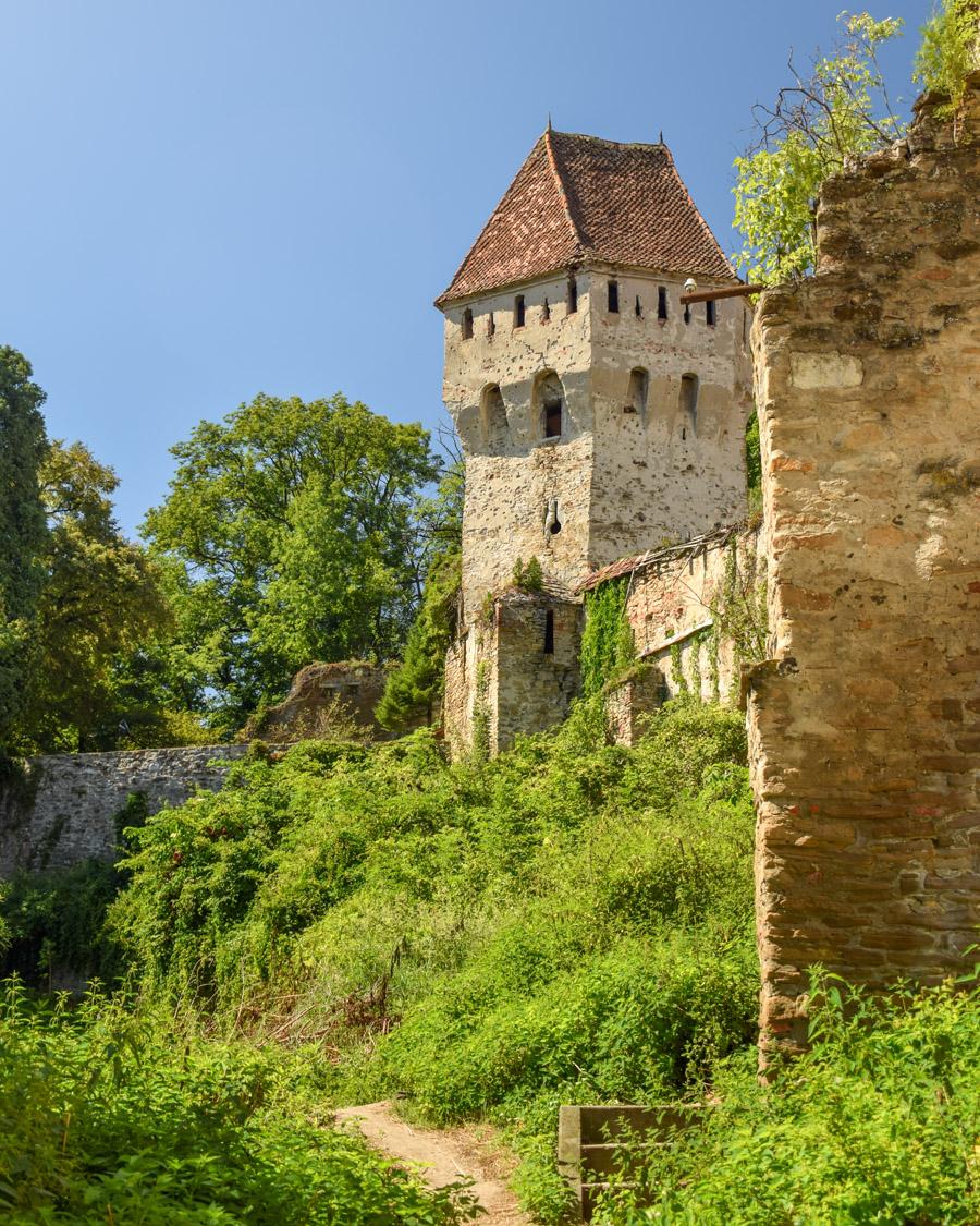turnul cositorarilor Sighișoara, România