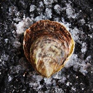 Zeeuwse Platte oester dicht - Design & Wijn Amsterdam