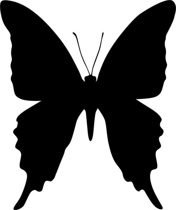 Perhonen pitkänomainen siivet