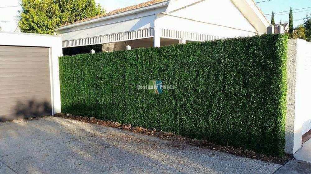 Box Wood Hedges