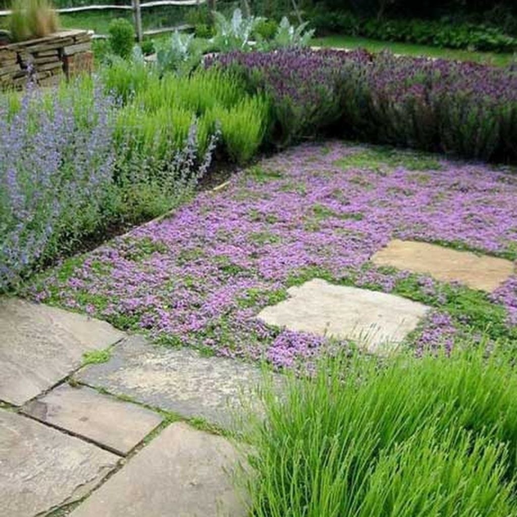 Alternatives to grass  what can I have instead of a lawn