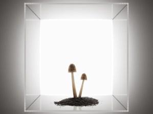 Recom-Arthouse-Sq-cgi-tom-price-5-600x449