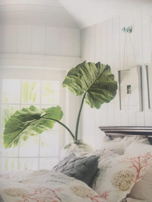 huge philodendron