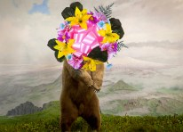 Jason DeMarte // Nature Preserve - Awesome Blossom