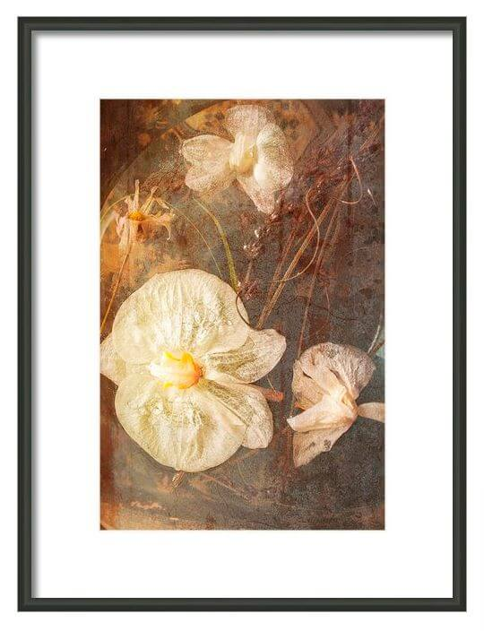 Original-Floral-Art-Prints-DueAlberi