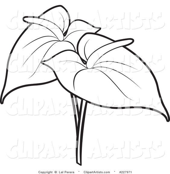 Anthurium coloring, Download Anthurium coloring for free 2019