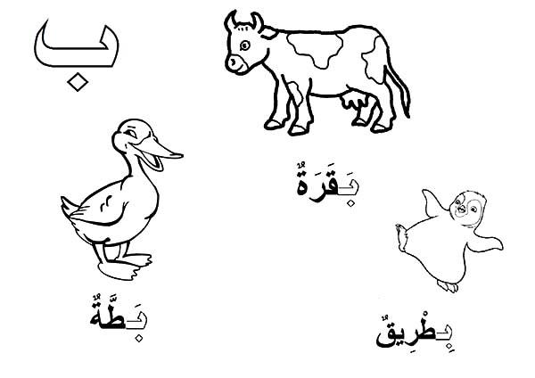 Arabis coloring, Download Arabis coloring