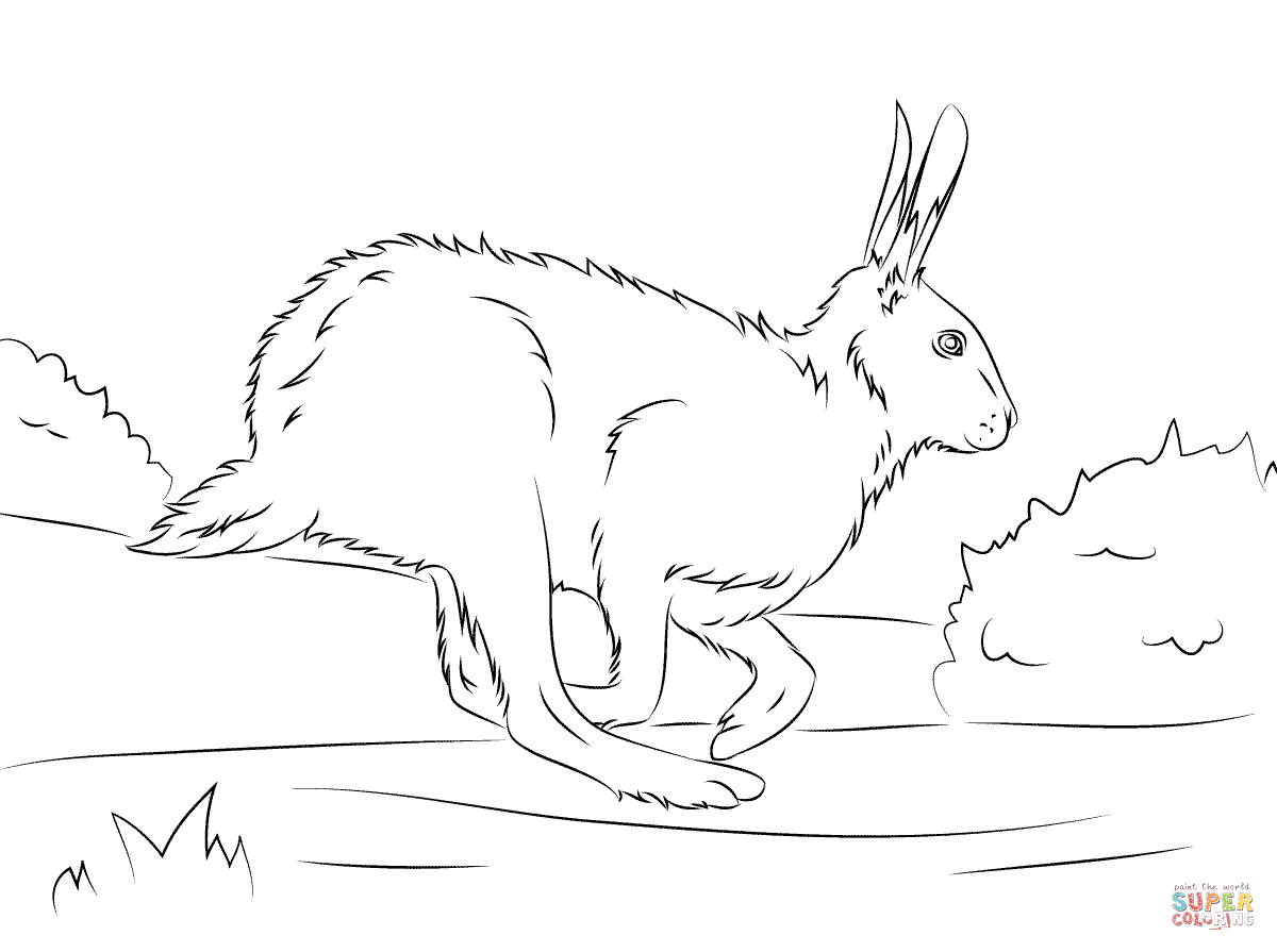 Arctic Hare Coloring Download Arctic Hare Coloring