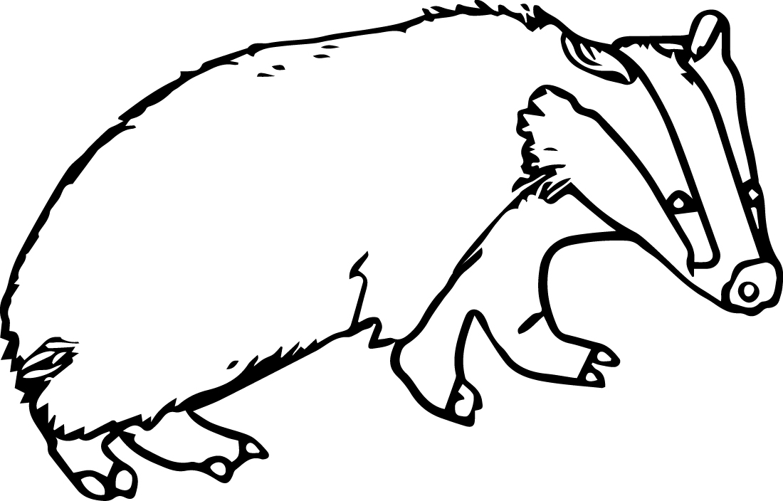 Badger coloring, Download Badger coloring