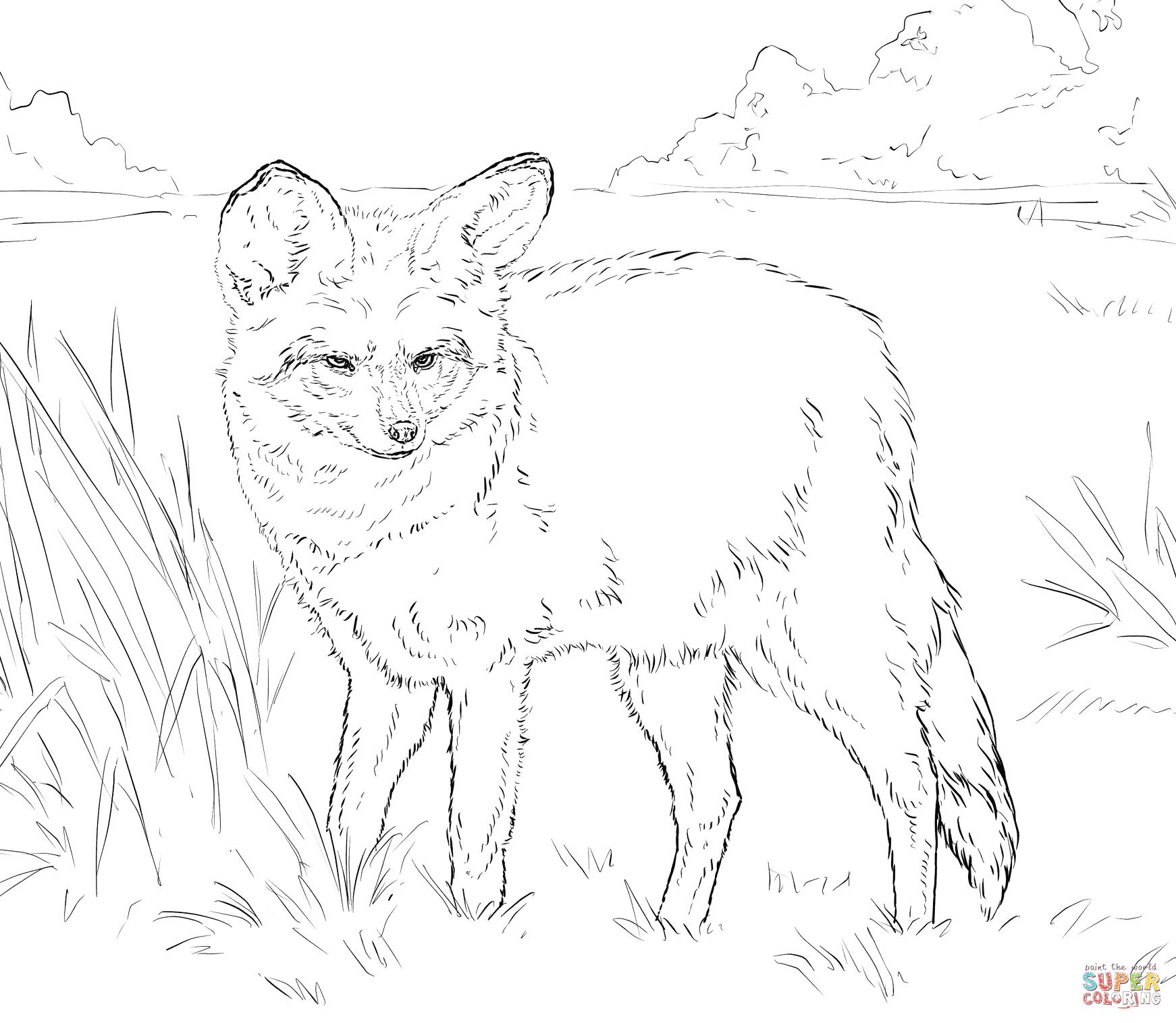 Bat-Eared Fox coloring, Download Bat-Eared Fox coloring