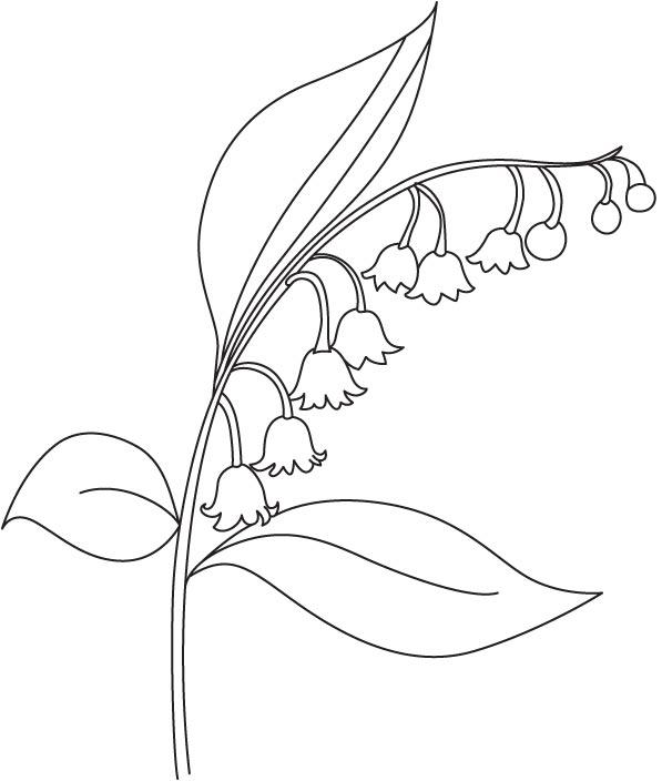 Bellflower coloring, Download Bellflower coloring for free
