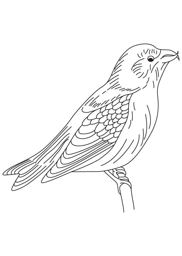Download Red-winged Blackbird coloring for free