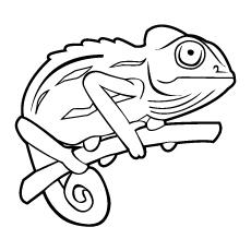 Chameleon coloring, Download Chameleon coloring for free 2019