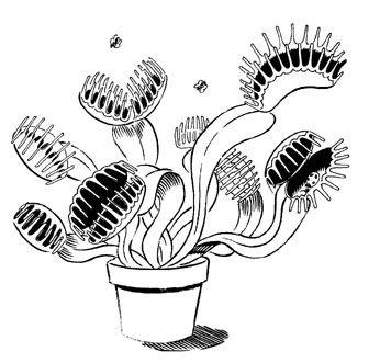Carnivorous Plant coloring, Download Carnivorous Plant