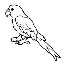 Sun Parakeet coloring, Download Sun Parakeet coloring for