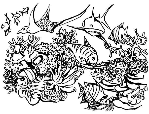 Coral Reef coloring, Download Coral Reef coloring