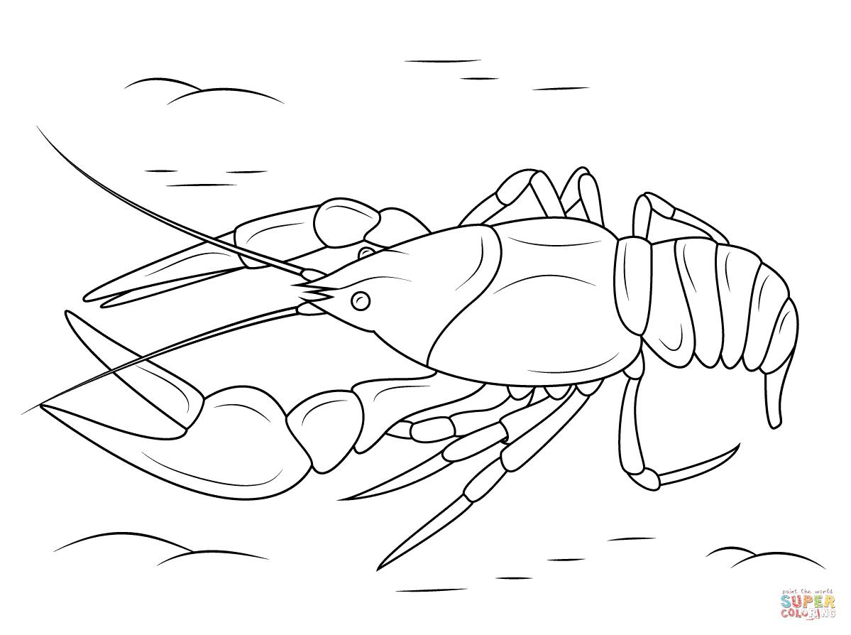 Crustacean coloring, Download Crustacean coloring