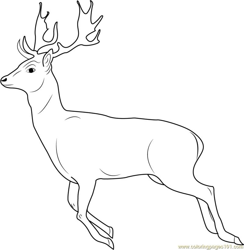 Seer coloring, Download Seer coloring