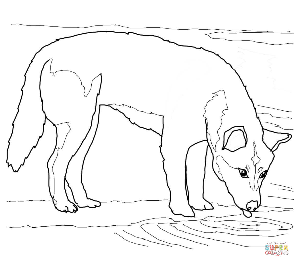 Dingo Coloring Download Dingo Coloring For Free