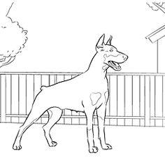 Doberman Pinscher coloring, Download Doberman Pinscher